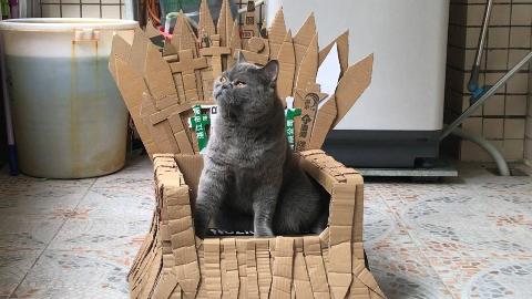 爱猫人士给猫星人做了一个王座,它很是喜欢