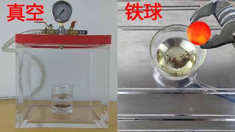 把小螃蟹放进真空箱,然后用1000度的铁球做油炸螃蟹吃掉!