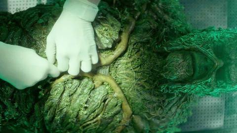 沼泽植物怪被男子拿来解剖,没想到里面的器官构造如此厉害