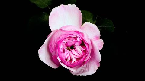 【纪录片】世界最大的鲜花市场【双语特效字幕】【纪录片之家字幕组】