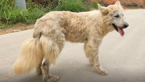 这个极品流浪狗居然被人扔在大山里,像狼又像狐狸,到底怎么回事