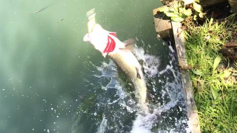 【虾子】英国湖泊钓狗鱼 #04