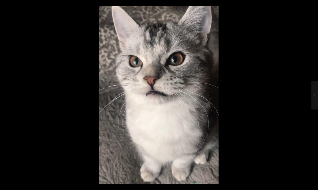 【抖音热门中的猫和狗】第一期!