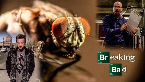 """【墨菲】《绝命毒师》第10期:最后一次忏悔,海森堡的心魔——关于""""打苍蝇""""剧集的分析"""