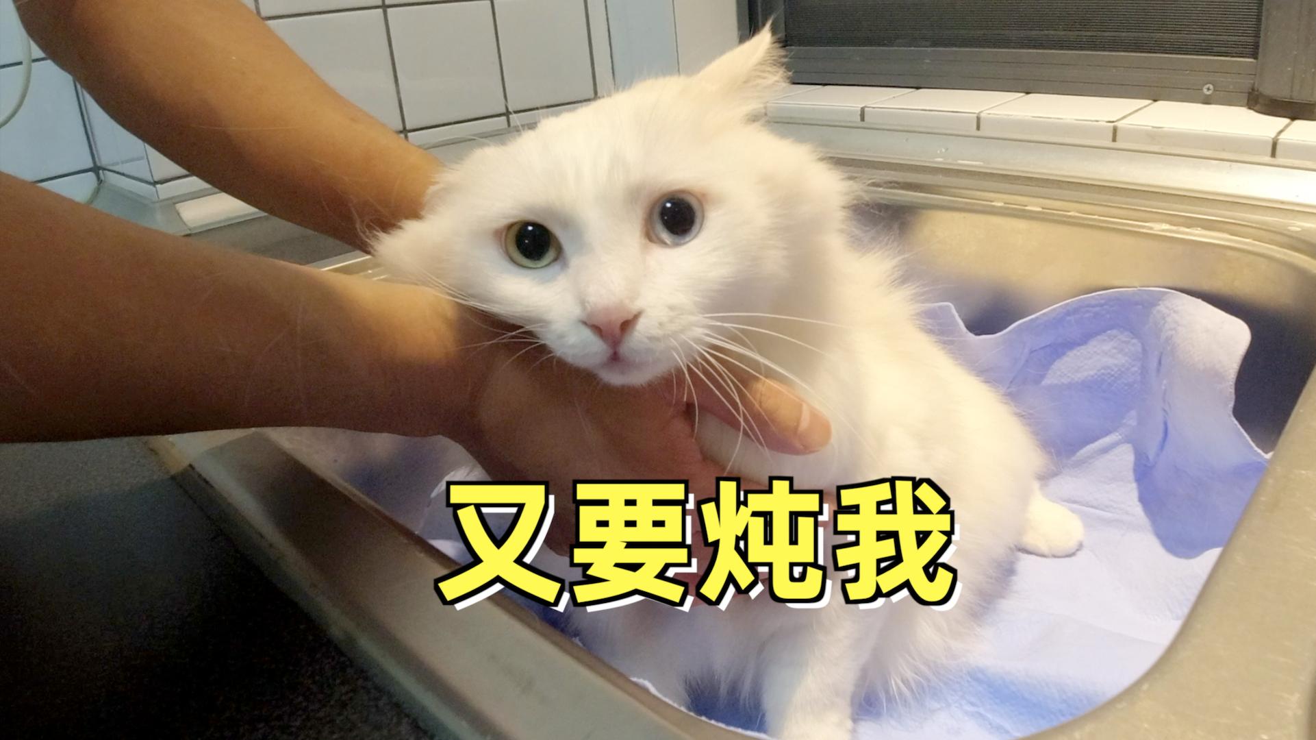 逗比主人给猫咪洗个澡, 还把猫咪做成奶油甜点,戏真多