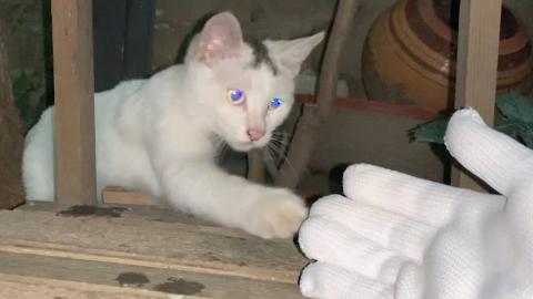 小白猫:你当着我的面抓了我兄弟还想抓我,没门儿