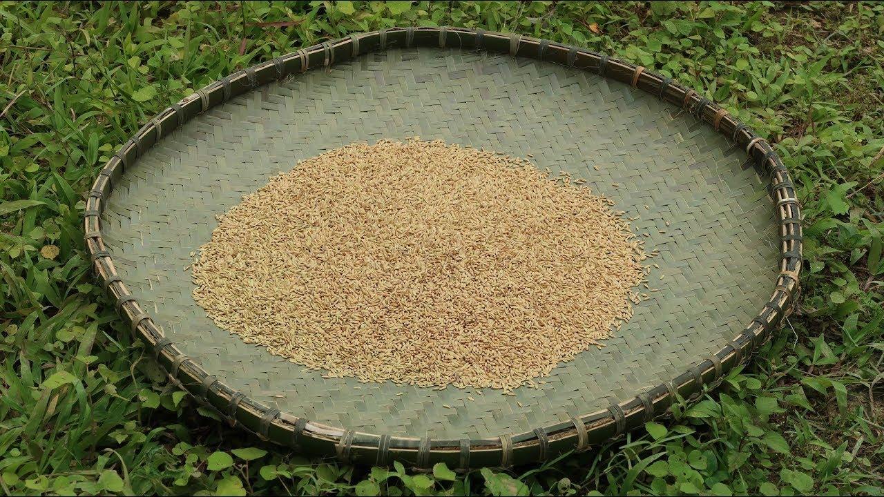原始技术:耕作技术(种子处理)第1部分