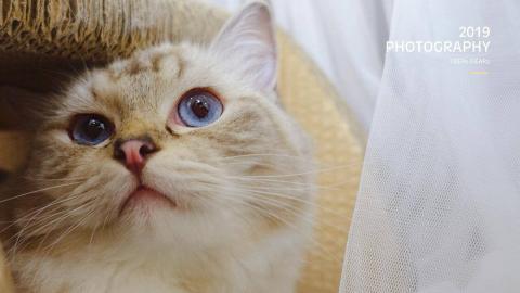 【孕检实录】你见过在肚子里会翻身还会挥挥手的小猫咪吗?【布偶漂漂】