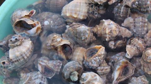 日本海鲜——蛤与螺