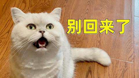 主人两天都不回家,想看猫咪是什么反应,猫:没吃的别回来了