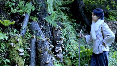 我把香菇种到山里啦!