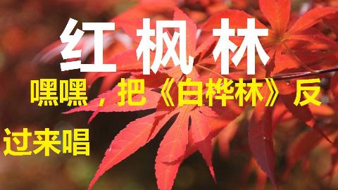 【流云の尬唱】《红枫林》搞怪:把《白桦林》反过来唱,唱出另一个故事…