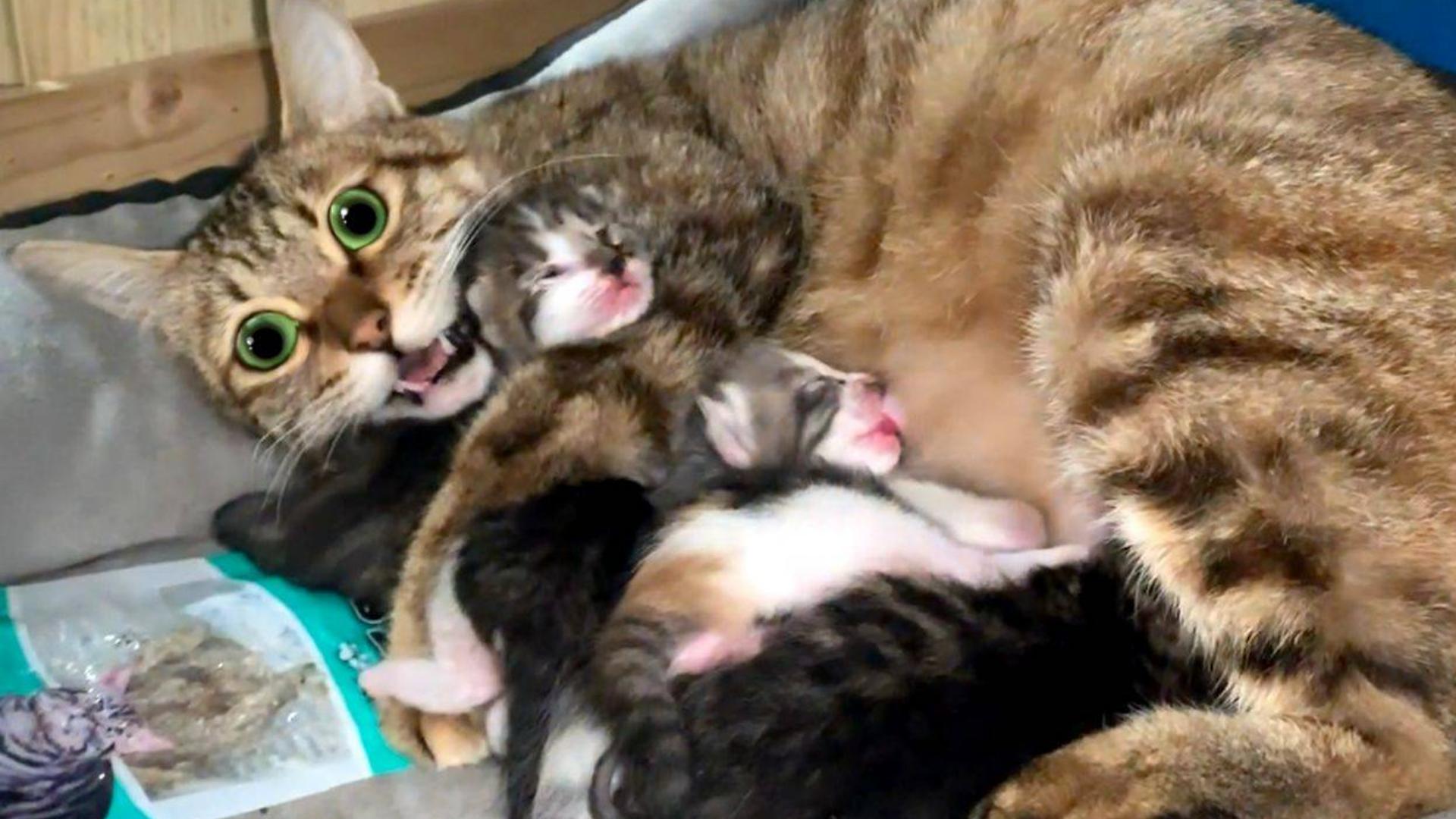流浪猫妈在狗窝产子,母性勇气让人动容!