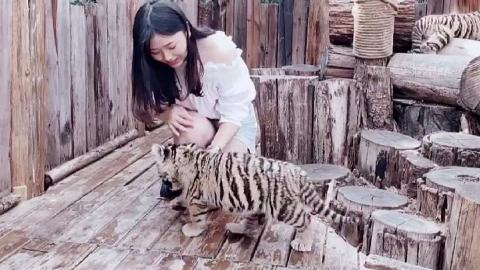 小诺的Vlog首秀 带你撸老虎摸浣熊喂长颈鹿看熊猫
