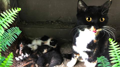 流浪猫妈商场边生下7只小猫,求求你能否给我个家?