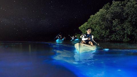 世界上最亮的荧光海,由人类无意中创建,几百年前被认为是魔鬼海