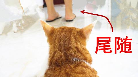 猫咪偷偷跟踪主人,竟发现她在外面有别的猫了!