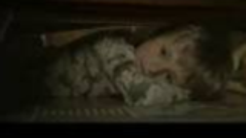 经典恐怖短片《床下有人》