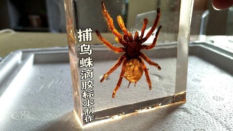 封印金色大蜘蛛的琥珀制作过程