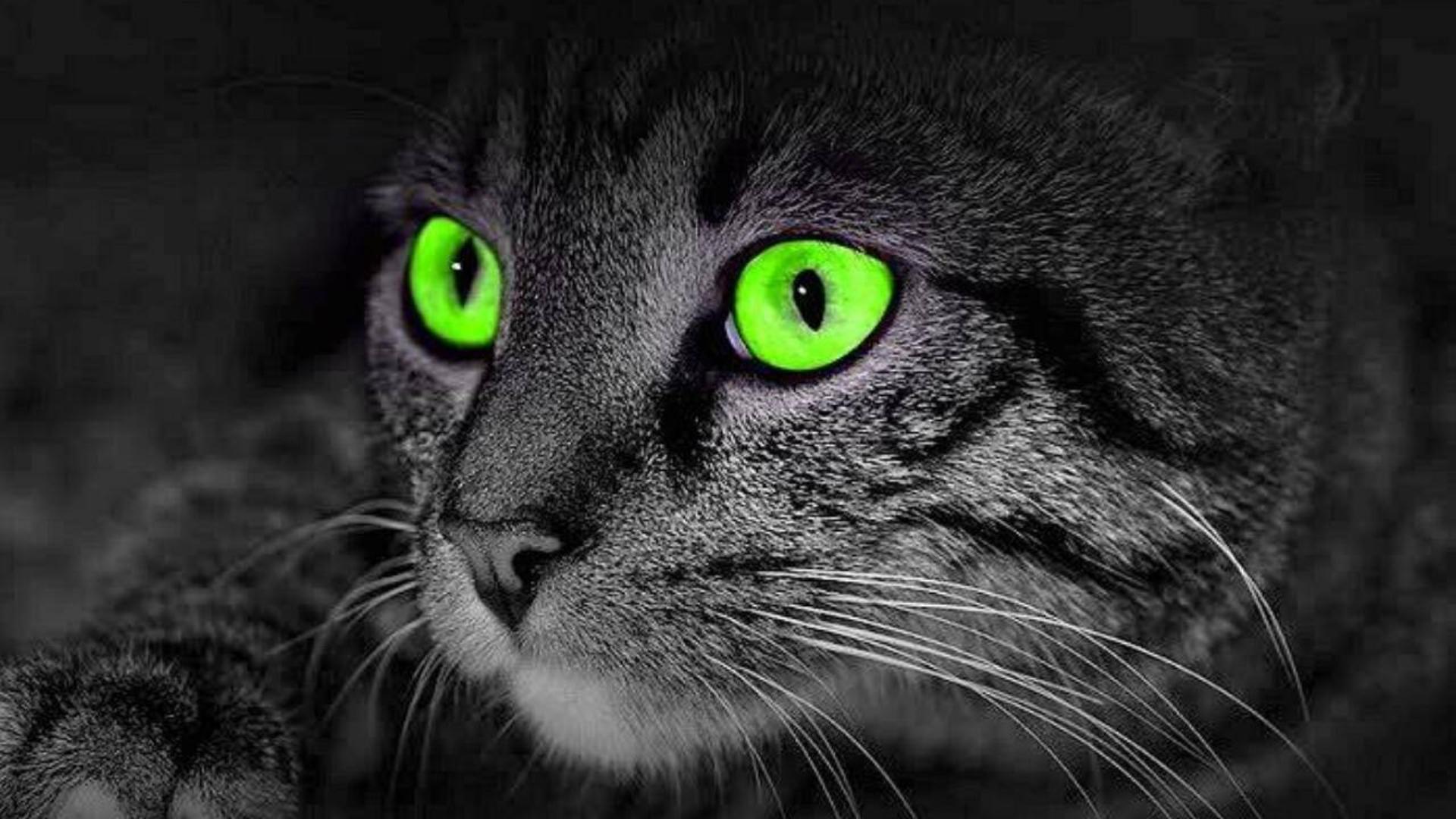 【奥雷】四则关于猫咪的恐怖小故事 让您一次看个够 欧美冷门分段式恐怖片《食人猫大报复》