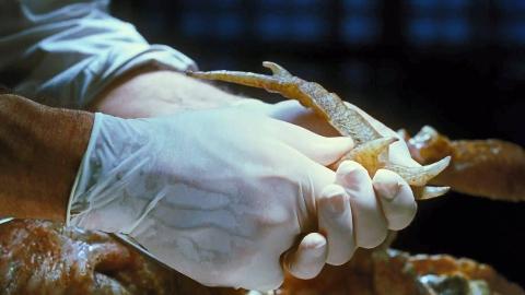 为了消灭蟑螂,研发出新物种,然而新物种比蟑螂还恐怖