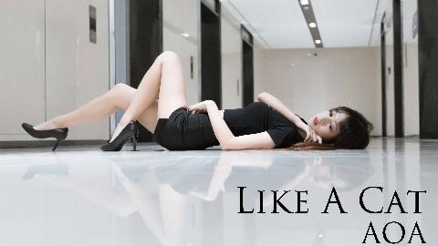 【A等生】【在校练习生】猫步轻悄(Like a cat)-AOA 想做你的小猫~