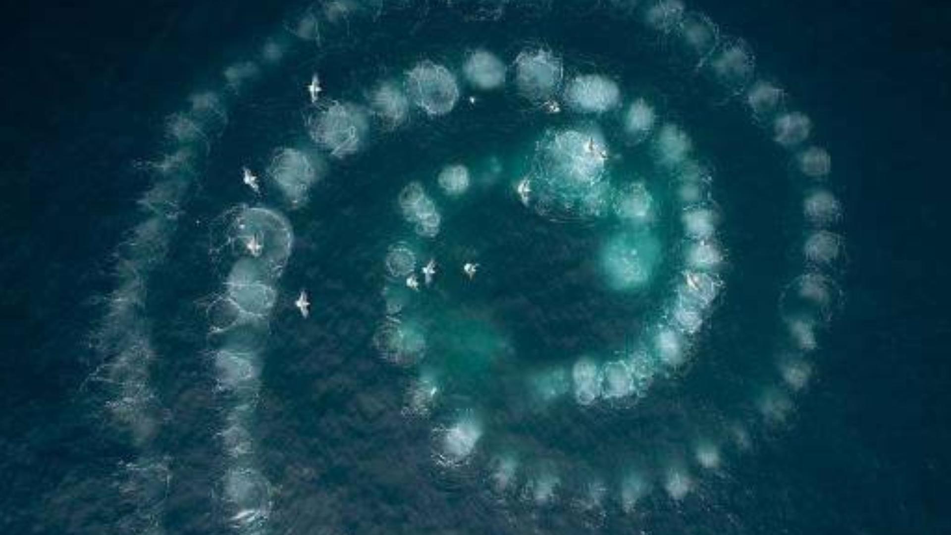2019纪录片《七个世界,一个星球 Seven Worlds, One Planet》04 澳洲