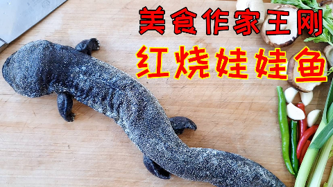 试吃试做:美食作家王刚《红烧娃娃鱼》给刚哥点赞!!!