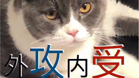 猫猫强吻主人 | 1分30秒高能 | 养猫真的很幸福
