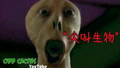 【胆小勿入】五个网上的诡异恐怖视频影片_奇怪的仙人掌