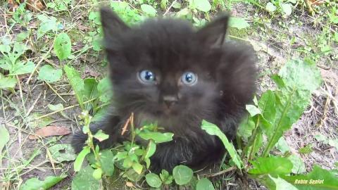 路边的小黑猫