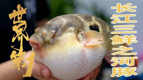 【世界第一系列】试吃长江三鲜之一的河豚 居然是元帅推荐的最高等级?