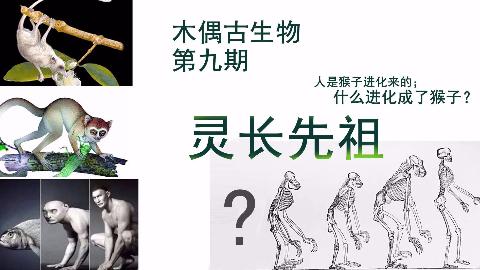 木偶古生物 第十期 灵长先祖