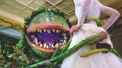 在唐人街2美金买了盆小花,半年后竟长成巨型食人花