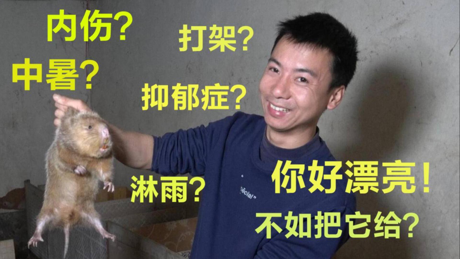 华农兄弟:吃100只竹鼠,涨500万粉丝!这也行?