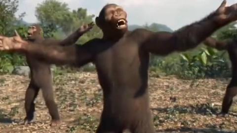 转载。超级大猩猩