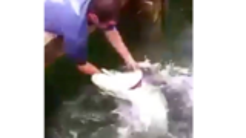 【搞笑】[20191004期] 好奇心害死猫;男子戏水被鱼咬中胳膊