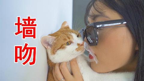 亲吻一只猫咪会怎样?猫:你只是得到了我的肉体!