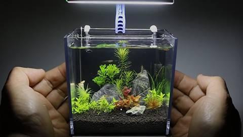 油管DIY大神教你用GoPro包装盒制作一个迷你生态鱼缸