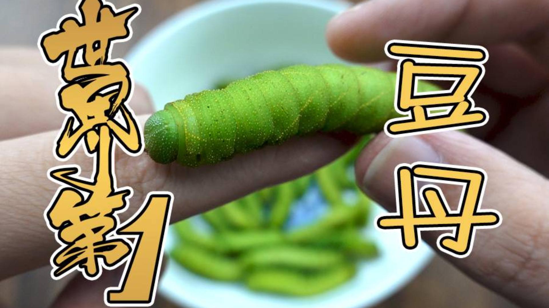【世界第一系列】试吃最美味之一的虫子 豆丹