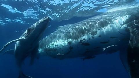 【纪录片】海中巨兽 2【双语特效字幕】【纪录片之家爱自然】
