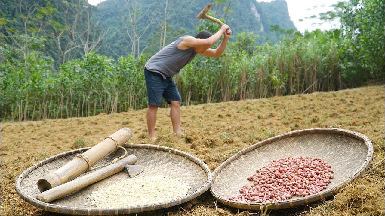 野外技能:你得学会食物种植