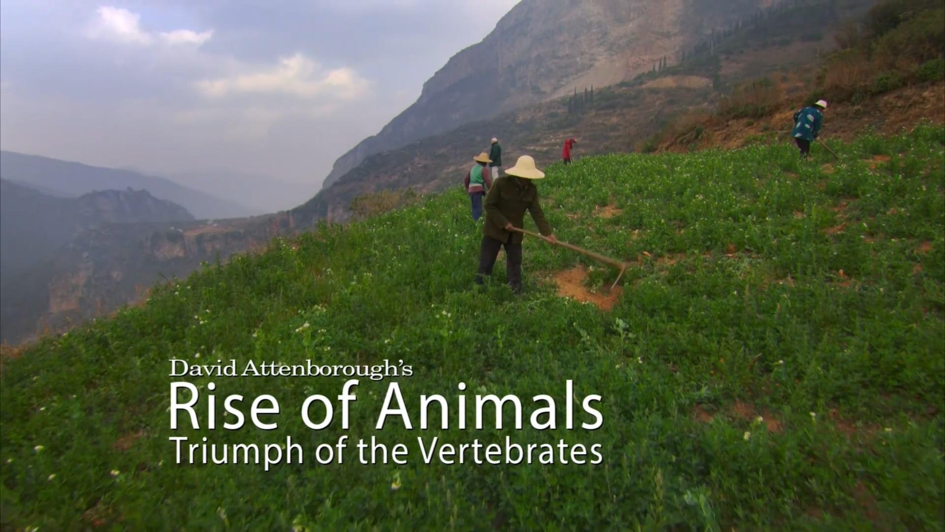 动物的崛起:脊椎动物的胜利  第二集  哺乳动物的曙光