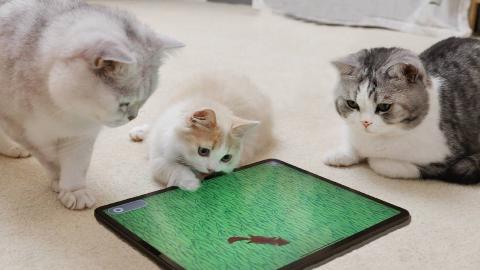 专为猫做的几款游戏,猫咪玩得太疯,差点把屏幕给抠烂!
