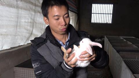 华农兄弟:最近经常下雨,菜叶子很湿,搞点米糠拌饭给兔子吃
