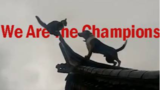 《We Are the Champions》
