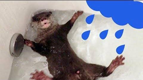 可爱水獭Kotaro的日常 5