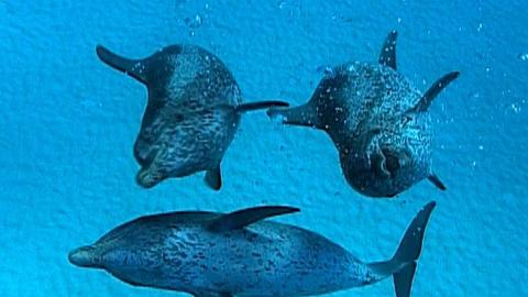 【纪录片】海中巨兽 3【双语特效字幕】【纪录片之家爱自然】