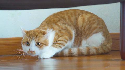 一只怕老鼠的猫,养你还有什么用?