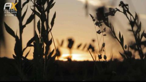【纪录片】《纯植物饮食国度》2015.720p.FIX字幕侠